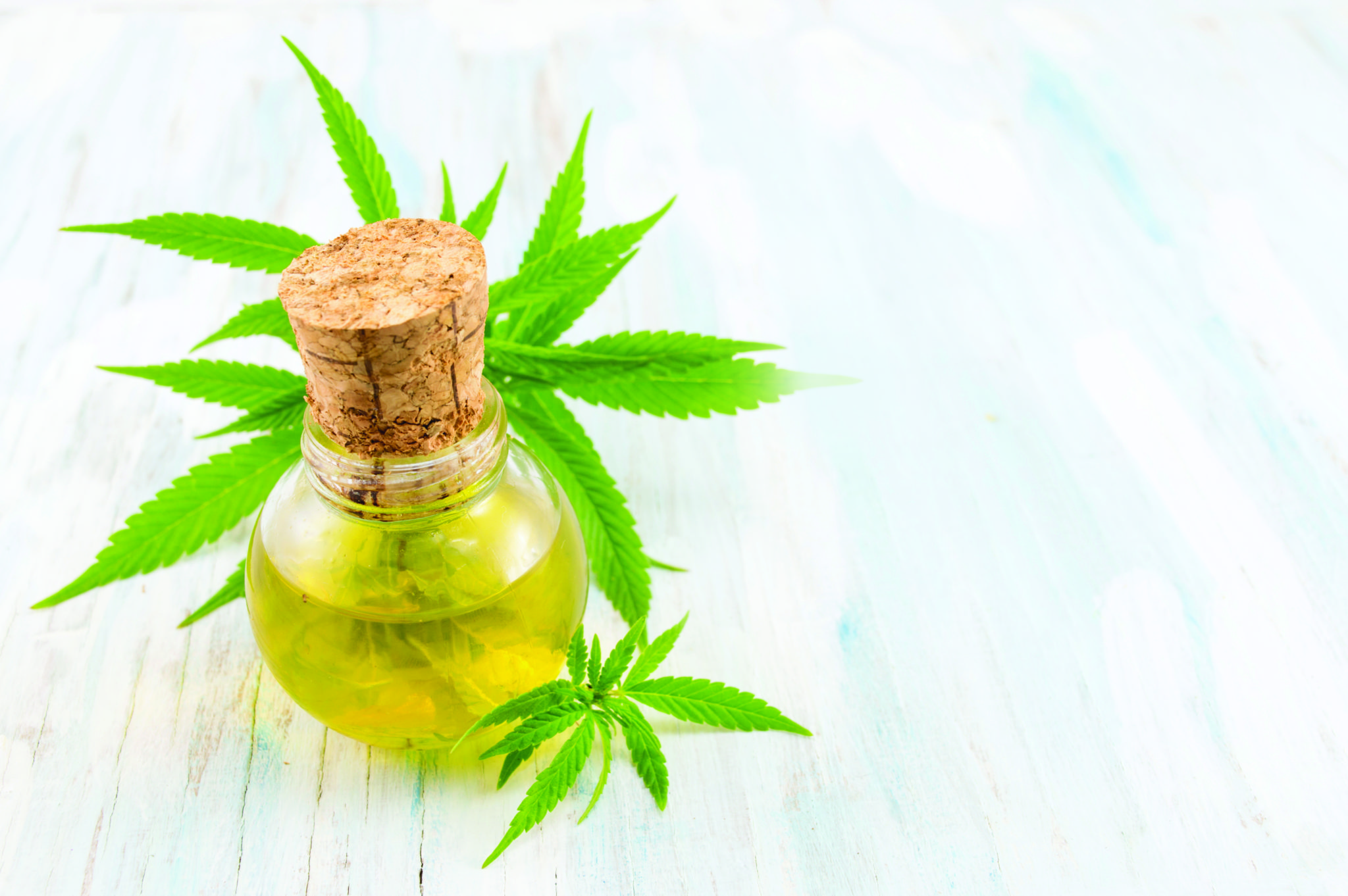 Hemp Oil/CBD: Shedding Some Light on the Confusion